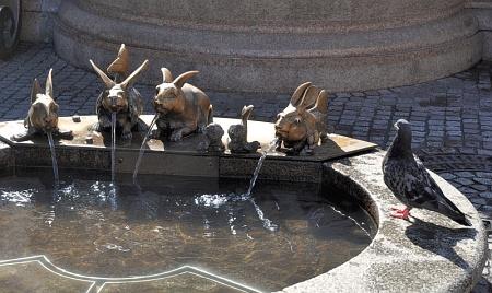 Eine Taube wundert sich über wasserspeiende Seehäslein.