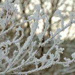 Stiller Tag in Schnee und Eis