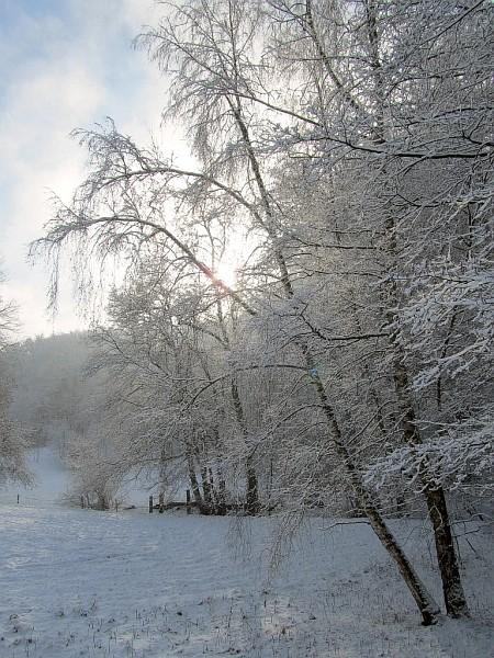 Ein silbrig-verschneiter Wald reizte auf dem Nachhauseweg zu ein paar spontanen Fotos. Zwar sind sie nicht in Spiegelreflexqualität, aber vielleicht dennoch sehenswert. (Foto: Martin Dühning)