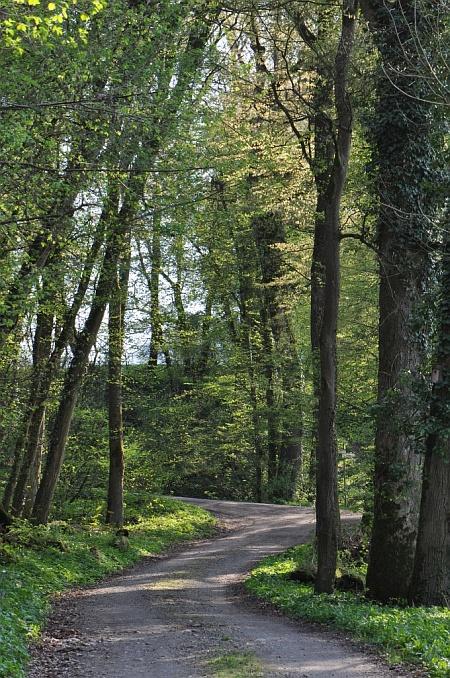 Maiengrüner Waldweg