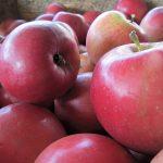 Ninda feiert das Apfelfest