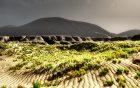 Vizekönig investiert in Landschaftsplanung