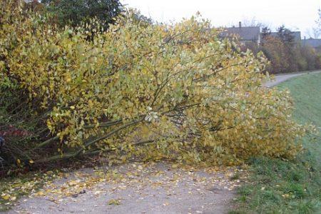 Es wird Herbst im Klettgau: Das Laub wird bunt und die Bäume fallen zu Boden. (Foto: Martin Dühning)