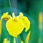 Viele Frühlingsfotos passend zum Frühlingsende