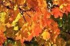 Es wird Herbst, es wird Winter…