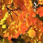 Es wird Herbst, es wird Winter...