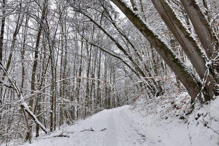 Winterwunderwald 2013 (Foto: Martin Dühning)