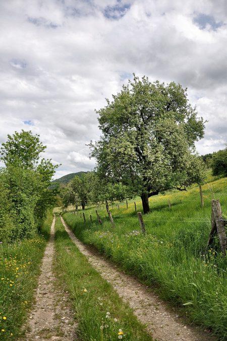 Wanderpfad im Klettgau an Christi Himmelfahrt, 2013 (Foto: Martin Dühning)