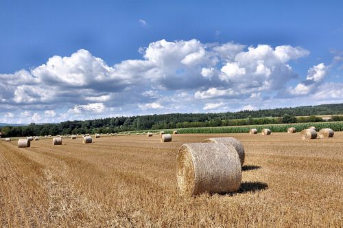 Sommerliche Felder bei Oberlauchringen: Strohrollen auf einem Stoppelfeld bei tiefblauem Himmel (Foto: Martin Dühning)