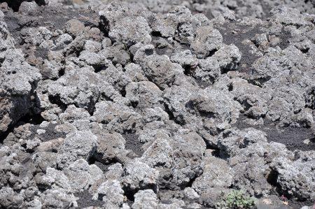 Flechten gehören zu den ersten Pionierpflanzen, die ein Lavafeld erschließen. Bis aus Stein fruchtbarer Boden wird, vergehen aber viele Jahrzehnte. (Foto: Martin Dühning)