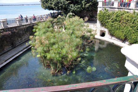 """Die """"Quelle der Aretusa"""" ist eine Süßwasserquelle in direkter Nähe zum Meer. Darinnen wächst Papyrus. (Foto: Martin Dühning)"""