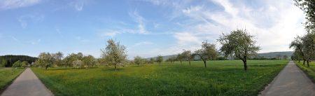 Panorama: Blühende alte Obstbäume in Oberlauchringen im April 2014 (Foto: Martin Dühning)