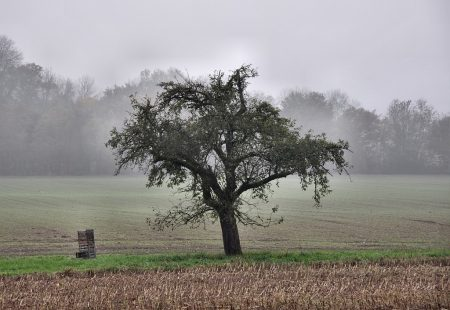 Grau schau, Baum! (Foto: Martin Dühning)