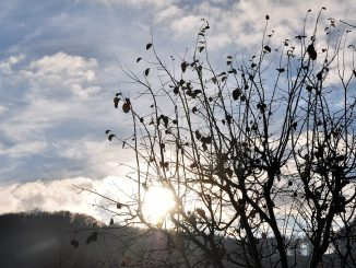 Im tiefen Mittwinter verschwindet die Sonne schon um 15:00 Uhr wieder hinter dem Berg, schön aber, wenn sie davor wenigstens mal kurz vorbeigeschaut hat... (Foto: Martin Dühning)