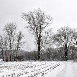 Neujahr im Schnee