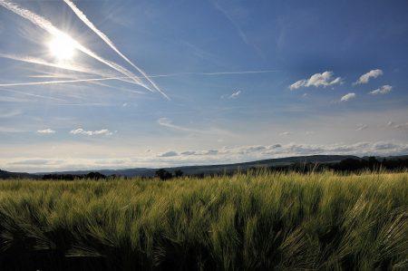Blau strahlt die Sonne am Junihimmel, die Getreidefelder noch grün und der auf den noch vorhandenen Ackerflächen allgegenwärtige Mai noch niedrig genug, um darüber hinweg zu fotografieren (Foto: Martin Dühning).