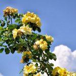 Frühlingsblüten-Nachlese