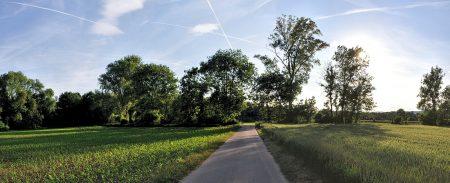 Um die Ecke herrschen noch pastorale Ansichten, mal abgesehen vom Zuchtmais links im Bild (Foto: Martin Dühning).