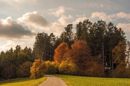 Herbstlich bunter Weg nahe der Kapelle von Baltersweil (Foto: Salome Lainarkunion)