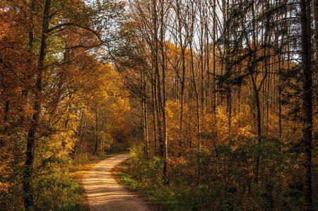 Herbstliche Waldwege im schwindenden Sonnenlicht (Foto: Salome Lainarkunion)