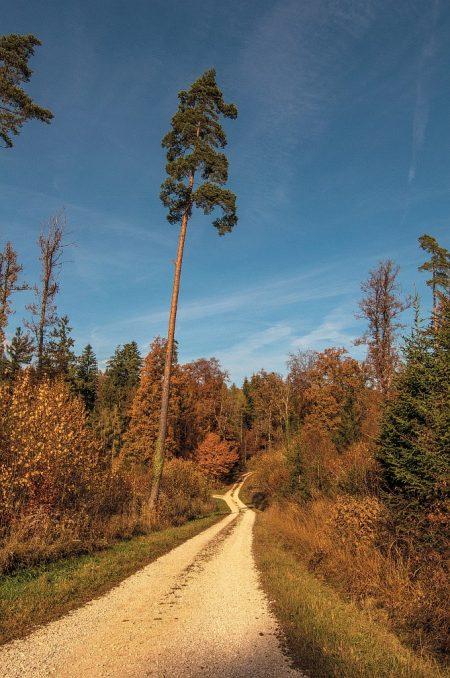 Lichtung im Herbstwald (Foto: Salome Lainarkunion)