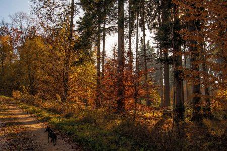 Mystischer Herbstwald (Foto: Salome Lainarkunion)