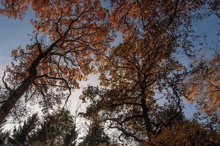 Blauer Himmel hinter herbstbunten Baumkronen (Foto: Salome Lainarkunion)
