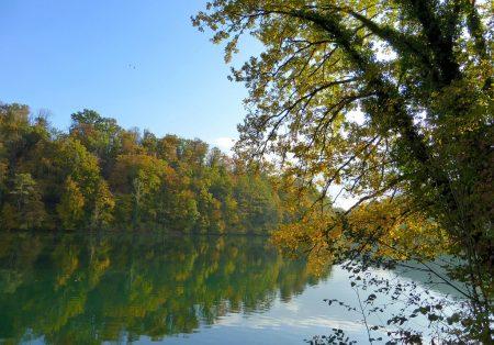 Herbstaue am Hochrhein im Oktober 2015 (Foto: Salome Leinarkunion)