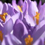 Projekte zum neuen Frühling