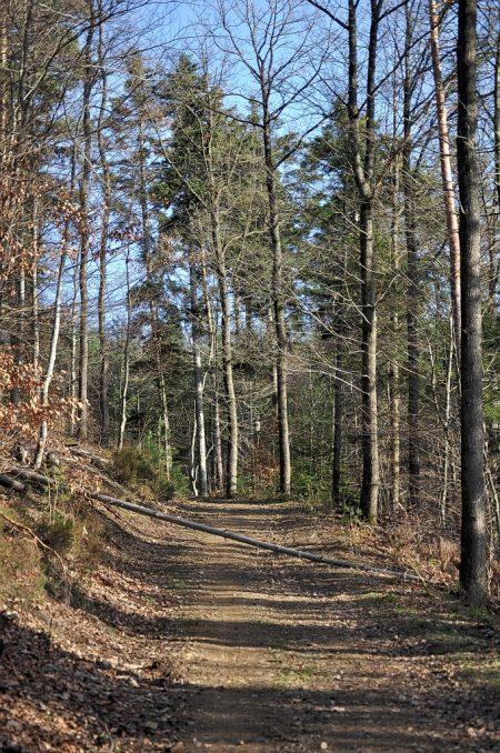 Sonnige Momente - Spaziergang Ende Januar 2016 im Nordschwarzwald, vor Fasnacht und Wintereinbruch (Foto: Salome Leinarkunion)