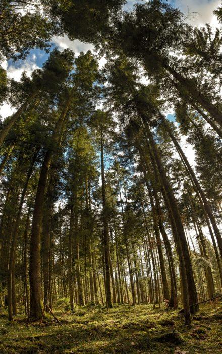 Mystischer Erbwald bei Bierbronnen (Foto: Martin Dühning)