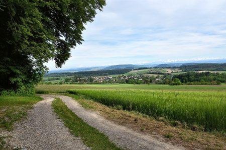 Weg Richtung Baltersweil vom Eichberg aus (Foto: Martin Dühning)