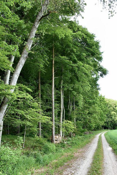Buchenmischwald beim Eichberg (Foto: Martin Dühning)