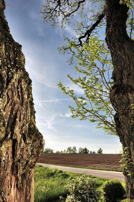 Zwischen zwei Bäumen (Foto: Salome Leinarkunion)