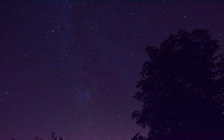 Heimatlicher Kastanienbaum mit Milchstraße beleuchtet (Foto: Martin Dühning)