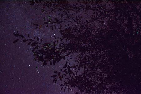 Sterne hinter Kirschbaumzweigen (Foto: Martin Dühning)