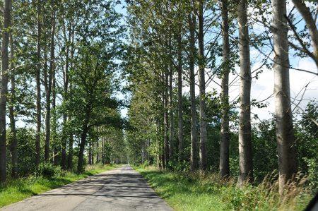 Allee einer polnischen Landstraße (Foto: Martin Dühning)