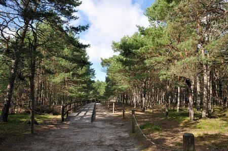 Slowinzischer Nationalpark (Foto: Martin Dühning)