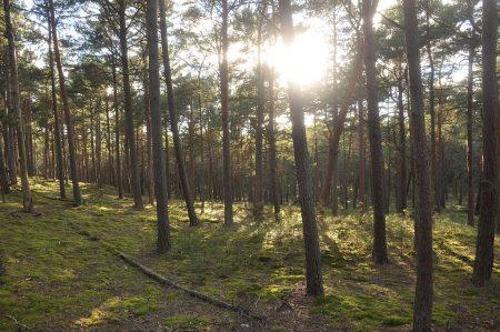 Mystisch-abendlicher Küstenwald (Foto: Martin Dühning)