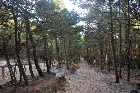 Der Weg abwärts durch den Küstenwald (Foto: Martin Dühning)