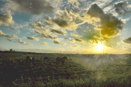 Slowinzische Pferde im Gegenlicht (Foto: Martin Dühning)