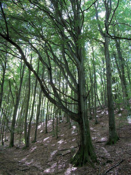 Merkwürdige Baumstrukturen (Foto: Salome Leinarkunion)