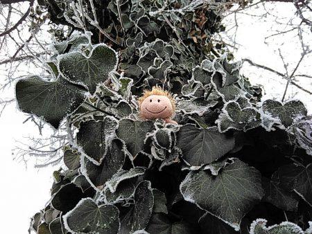 Zwergfee im Wintergrün (Foto: Salome Leinarkunion)
