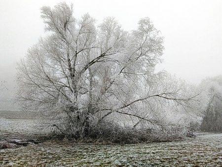 Bereifte Winterlandschaft bei Offenburg (Foto: Salome Leinarkunion)