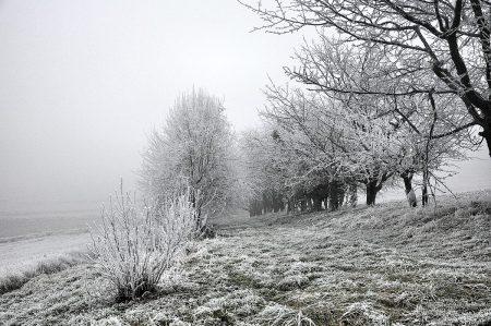 Raufreiflandschaft in der Ortenau im Dezember 2016 (Foto: Salome Leinarkunion)