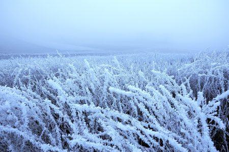 Dezemberlandschaft im Zwielicht (Foto: Salome Leinarkunion)