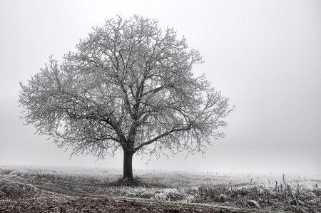 Ein einsamer Baum im Eisnebelmeer (Foto: Salome Leinarkunion)