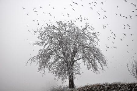 Eisbaum mit Vogelschwarm im Nebelmeer (Foto: Salome Leinarkunion)