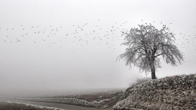 Ein Vorwinterwunderland präsentierte sich aufgeschlossenen Spaziergängern in der Gegend um Hohberg (Foto: Salome Leinarkunion)