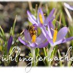 """Frühlingserwachen mit """"Madelyn""""-Text (Foto und Grafik: Martin Dühning)"""